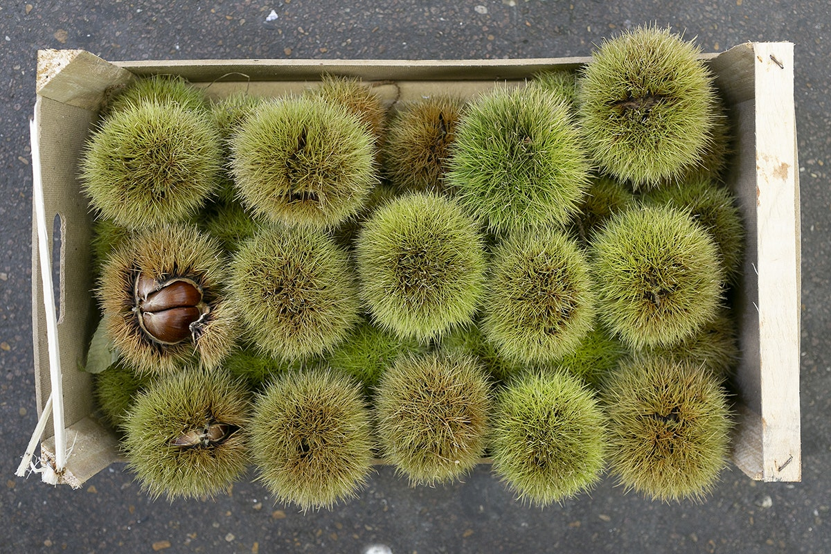 Fruit And Vegetable Market Chefs Guide To Chestnuts Spikey