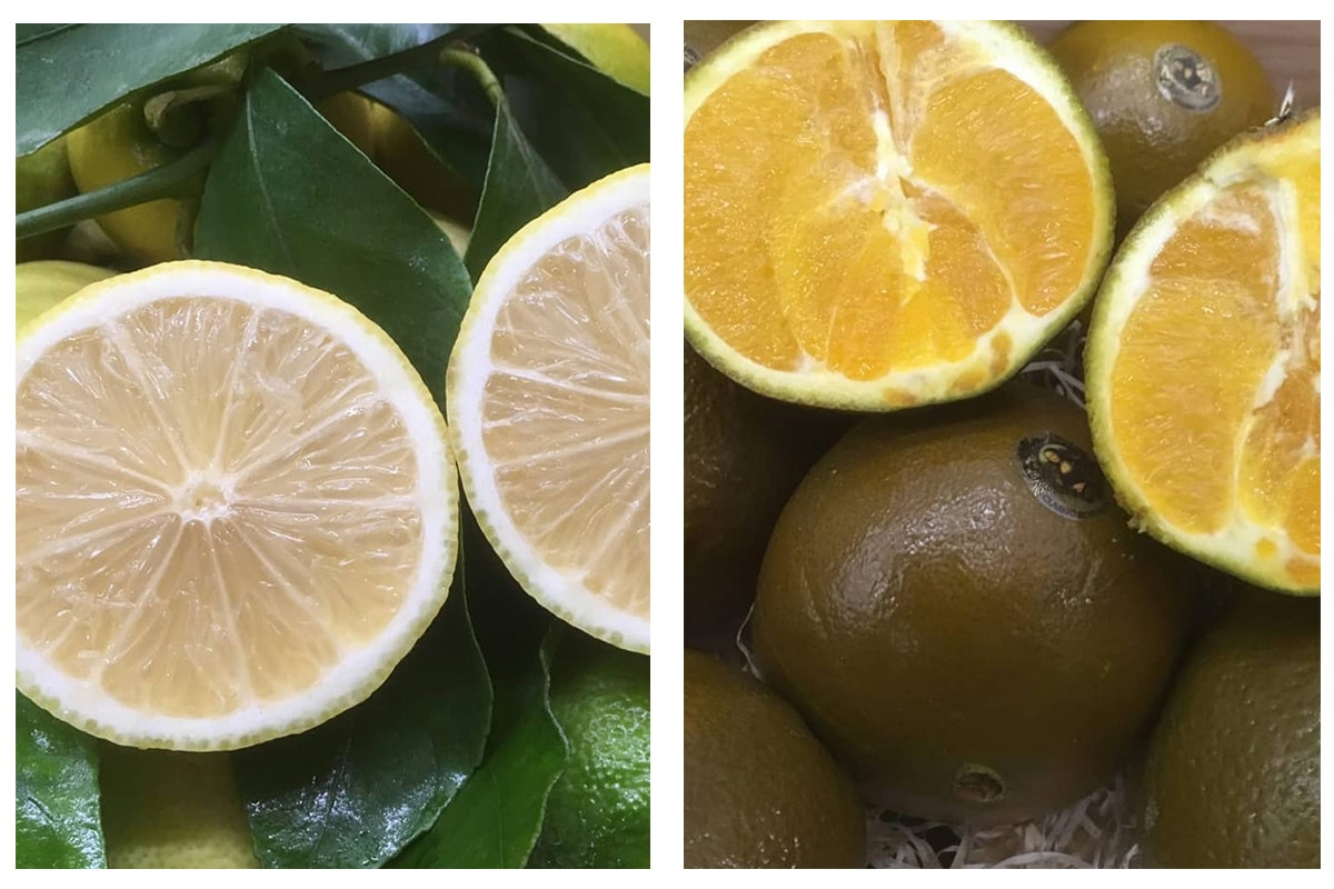 Fruit And Vegetable Market Chefs Guide To Food Trends 2020 Citrus Le Marche