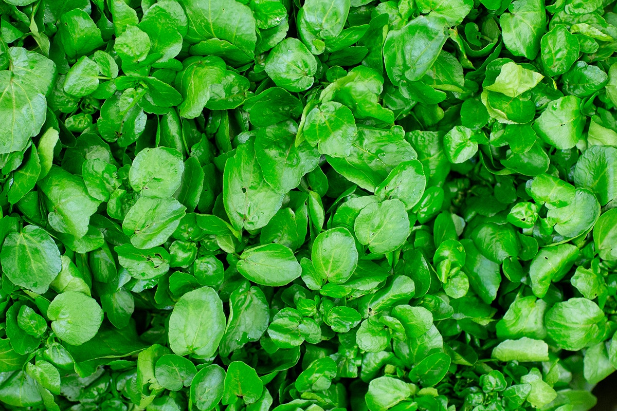 Fruit And Vegetable Market Chefs Guide To Food Trends 2020 Watercress Low Res