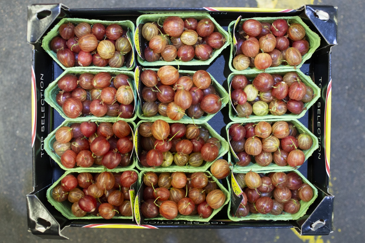 Fruit And Vegetable Market Chefs Guide To Gooseberries Red Fruit Gilgrove