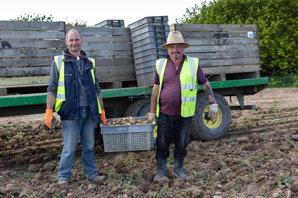 Fruit And Vegetable Market Chefs Guide To Jersey Royals Pickers