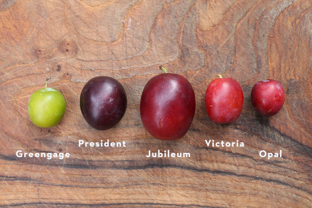 Fruit And Vegetable Market Chefs Guide To Plums Varieties