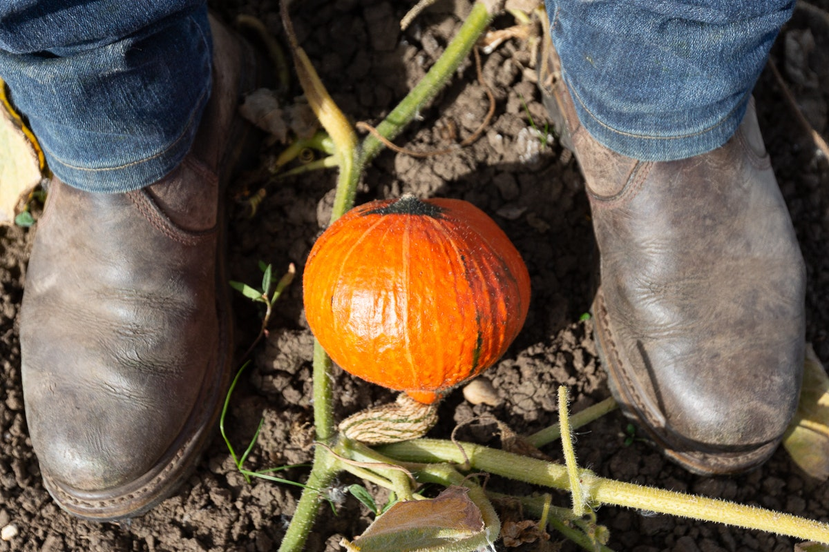 Fruit And Vegetable Market Chefs Guide To Squashes Onion Squash Boots