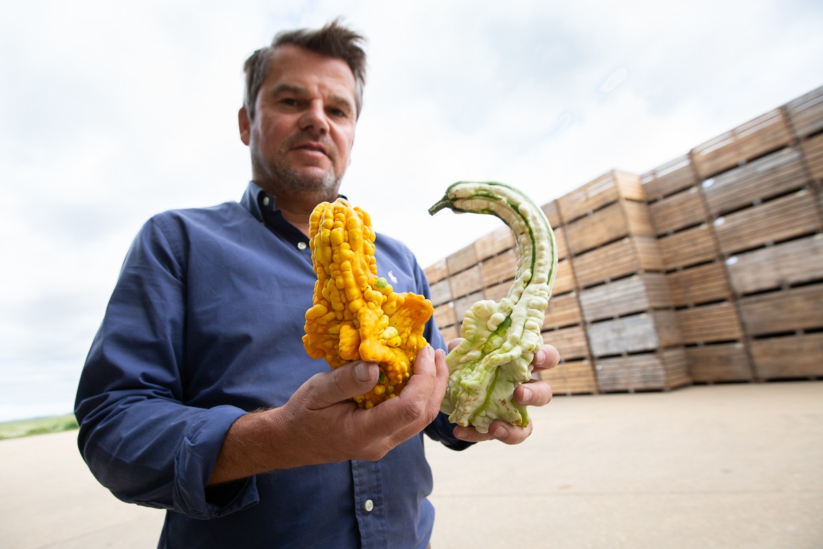 Fruit And Vegetable Market Chefs Guide To Squashes Ornamental Gourds