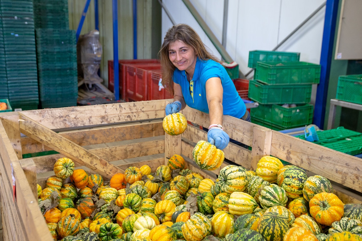 Fruit And Vegetable Market Chefs Guide To Squashes Packhouse
