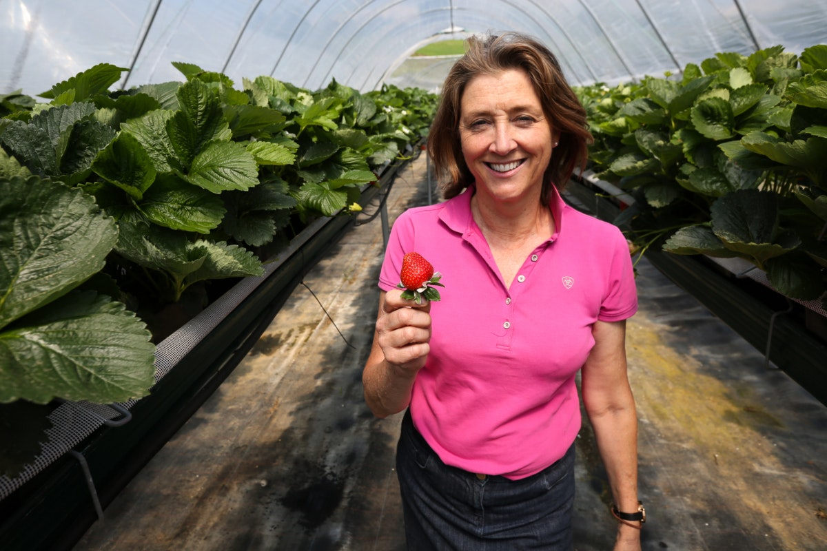 Fruit And Vegetable Market Chefs Guide To Strawberries May 2018 Marion Regan