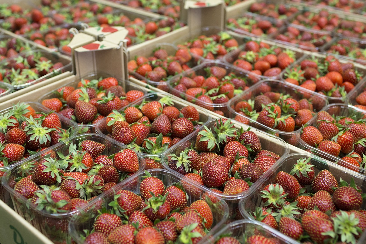 Fruit And Vegetable Market Chefs Guide To Strawberries May 2018 Punnets