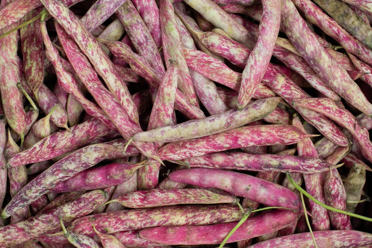 Fruit And Vegetable Market Chefs Guide To Summer Beans Borlotti