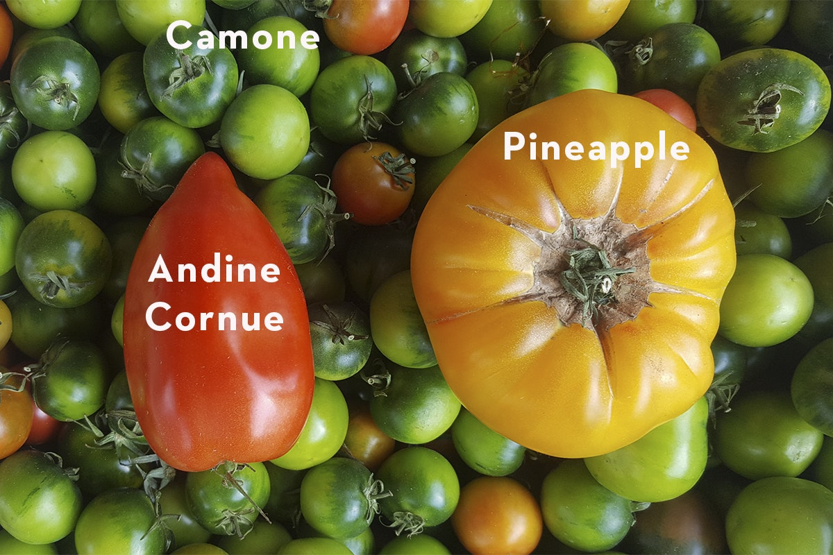 Fruit And Vegetable Market Chefs Guide To Tomatoes Camone Pineapple Copy