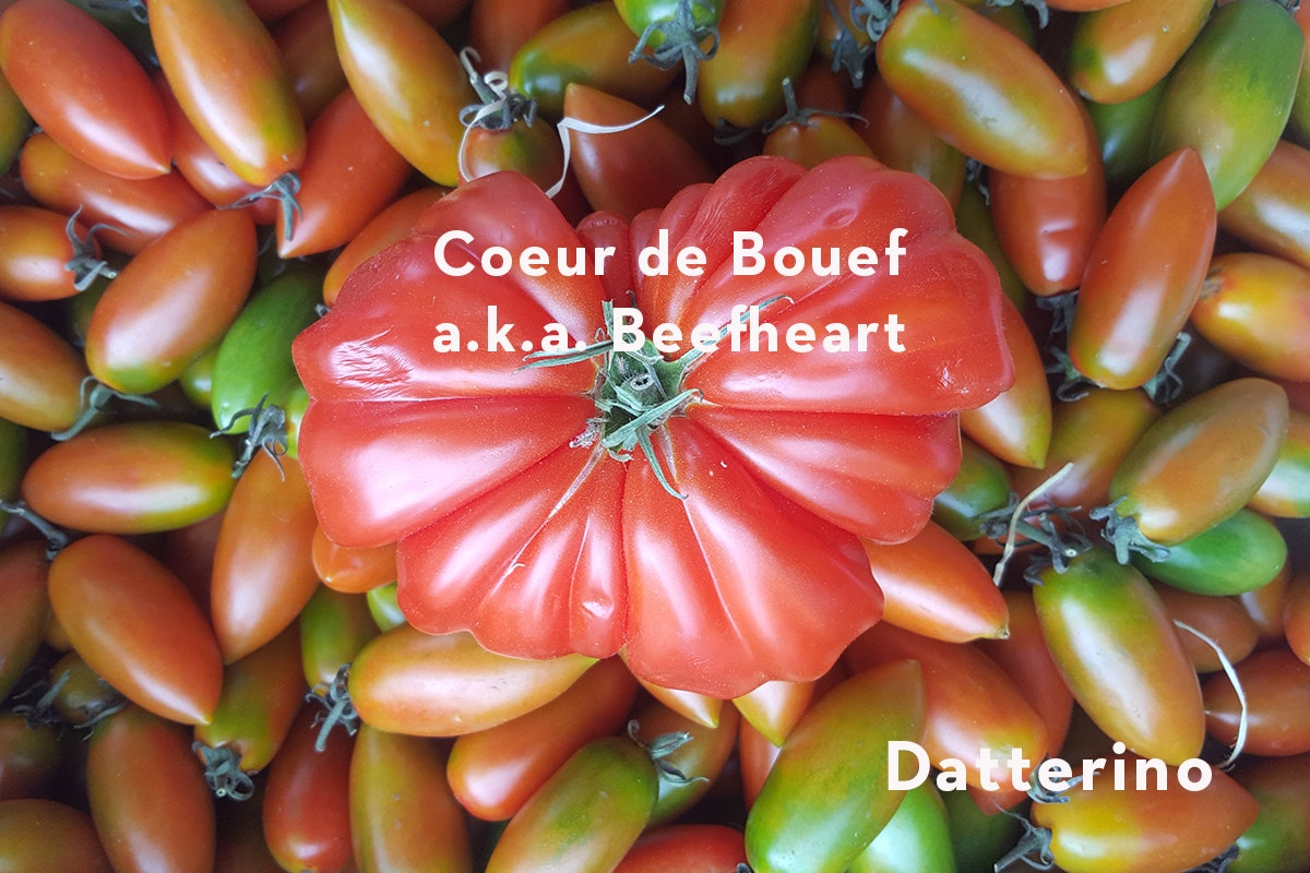 Fruit And Vegetable Market Chefs Guide To Tomatoes Datterino Beefheart