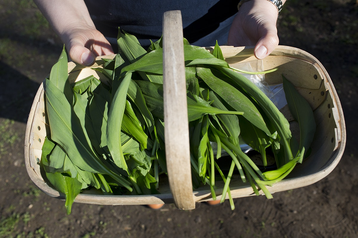 Fruit And Vegetable Market Chefs Guide To Wild Garlic Basket
