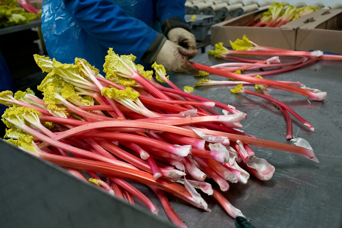 Fruit And Vegetable Market Chefs Guide To Yorkshire Forced Rhubarb January 2018 Grading