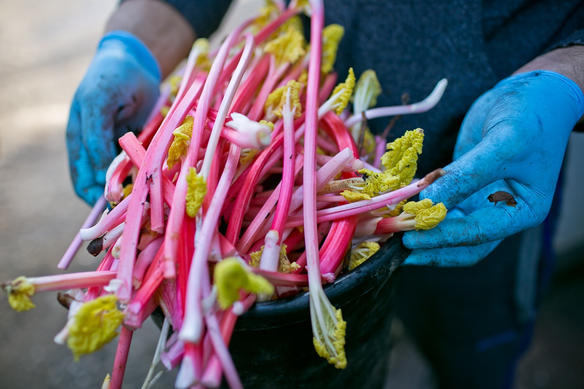 Fruit And Vegetable Market Chefs Guide To Yorkshire Forced Rhubarb January 2018 Thin Grade