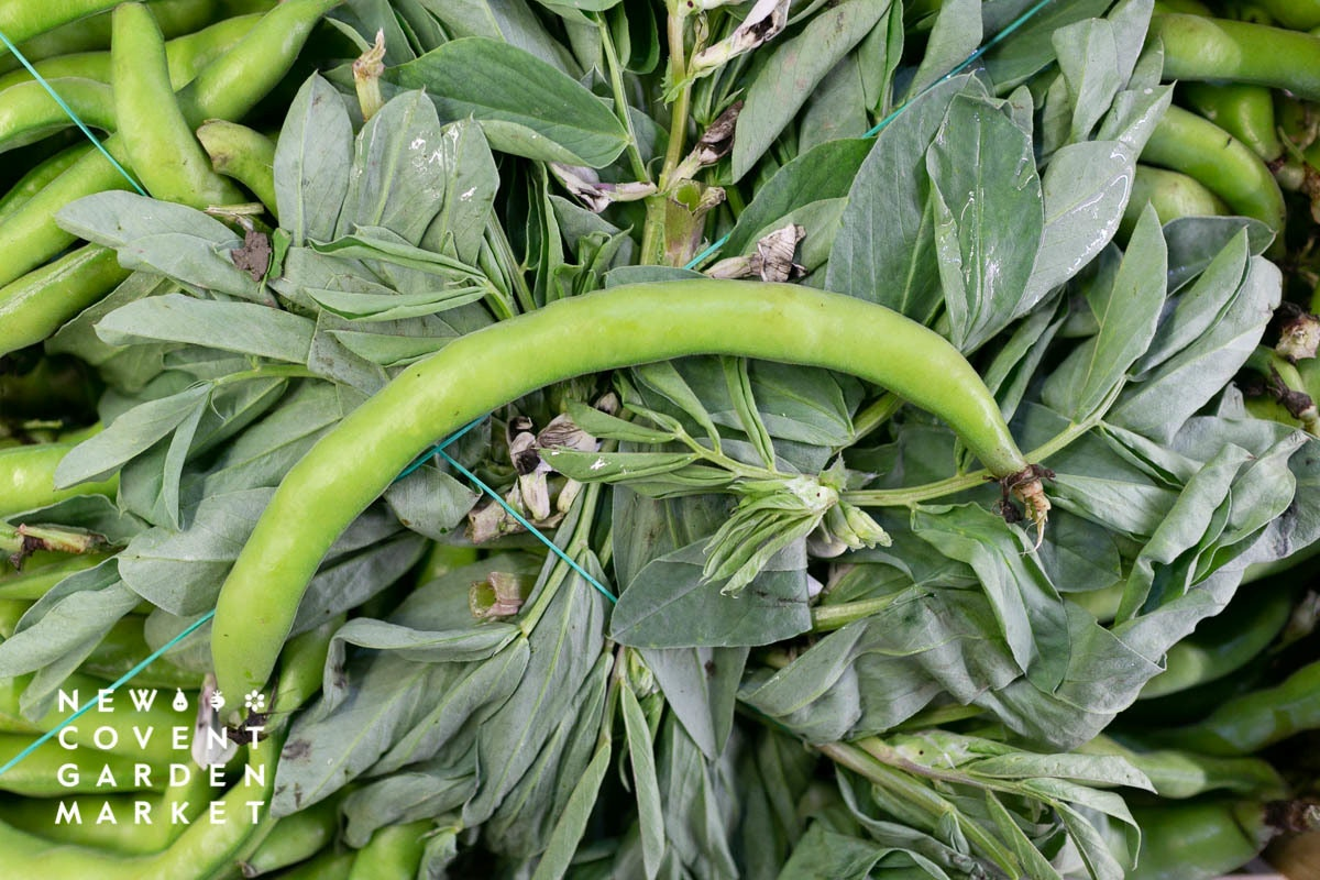 Fruit And Vegetable Market Report February 2020 Broad Beans
