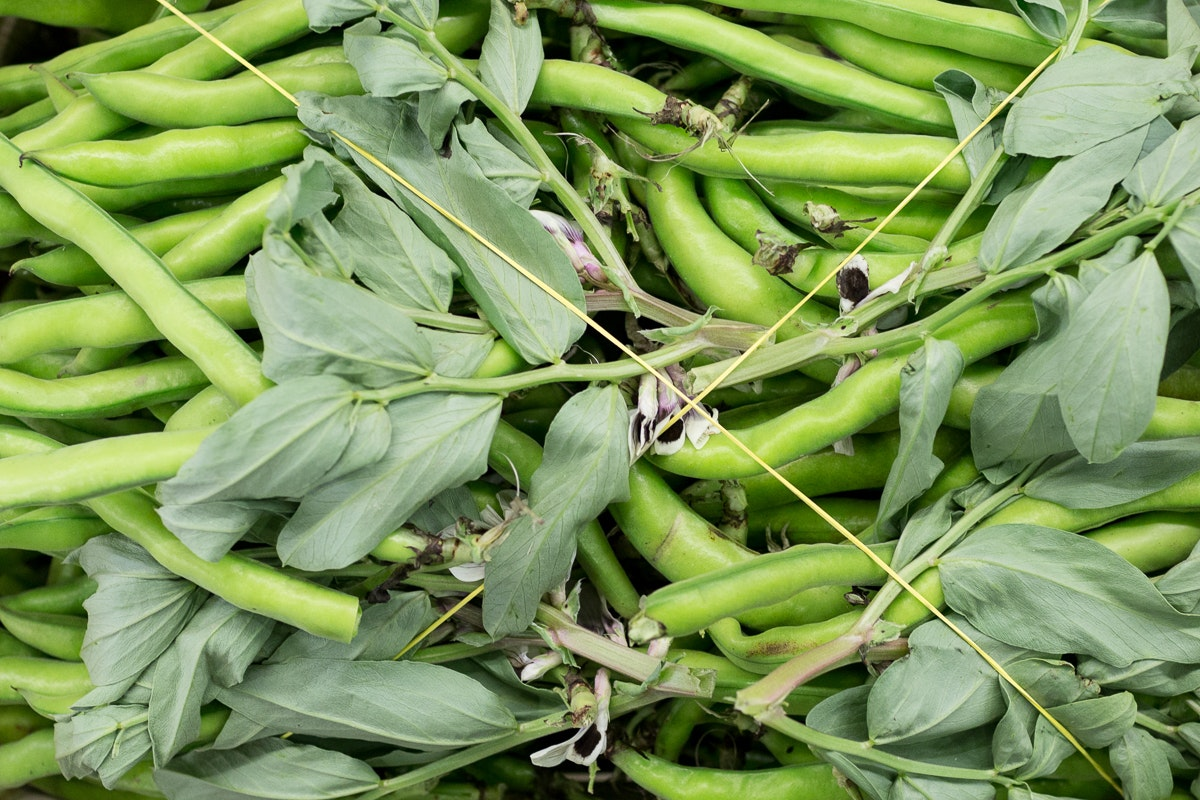 Fruit And Vegetable Market Report March 2018 Broad Beans