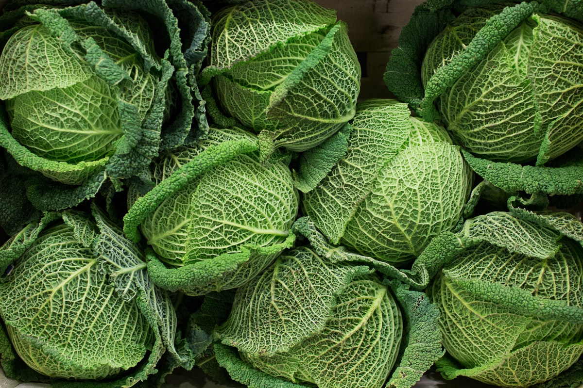 Fruit And Vegetable Market Report March 2018 Savoy Cabbage