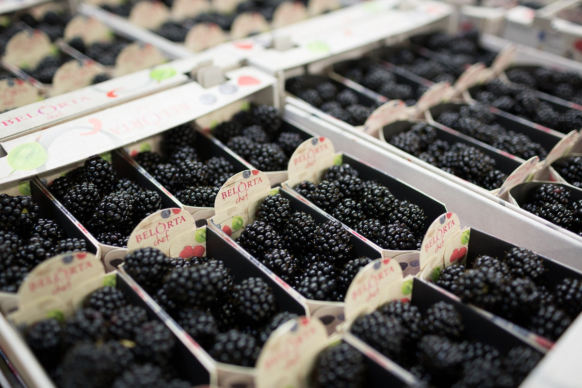 Fruit And Vegetable Market Report November 2017 Blackberries