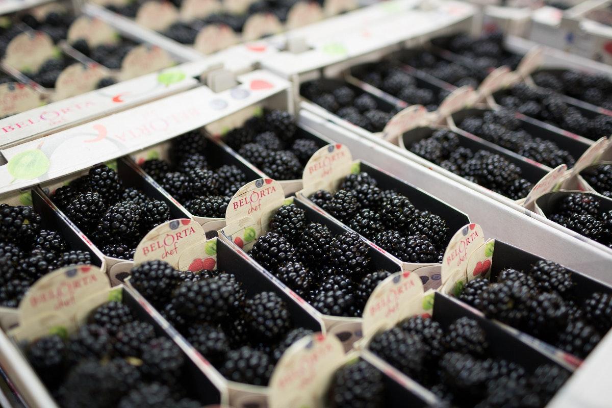 Fruit And Vegetable Market Report November 2017 Blackberries