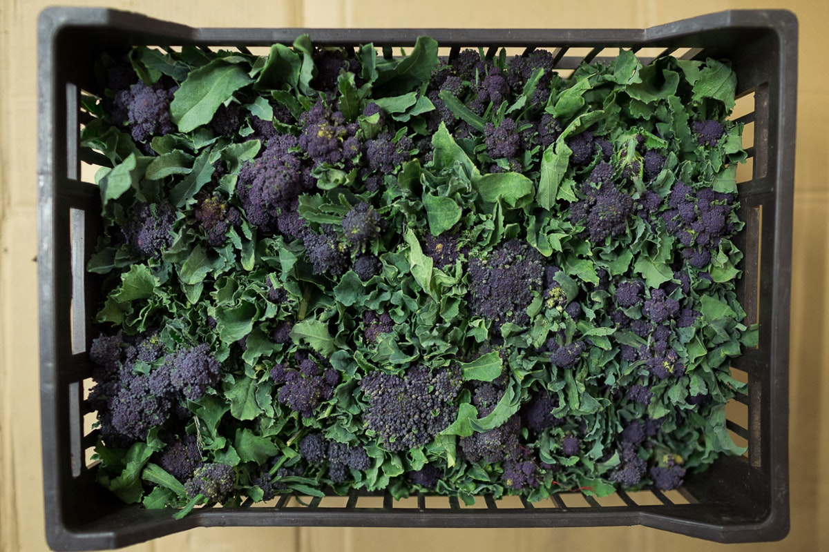 Fruit And Vegetable Market Report November Purple Sprouting