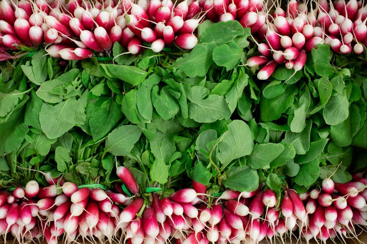 Fruit And Vegetable Market Report September 2018 Radishes