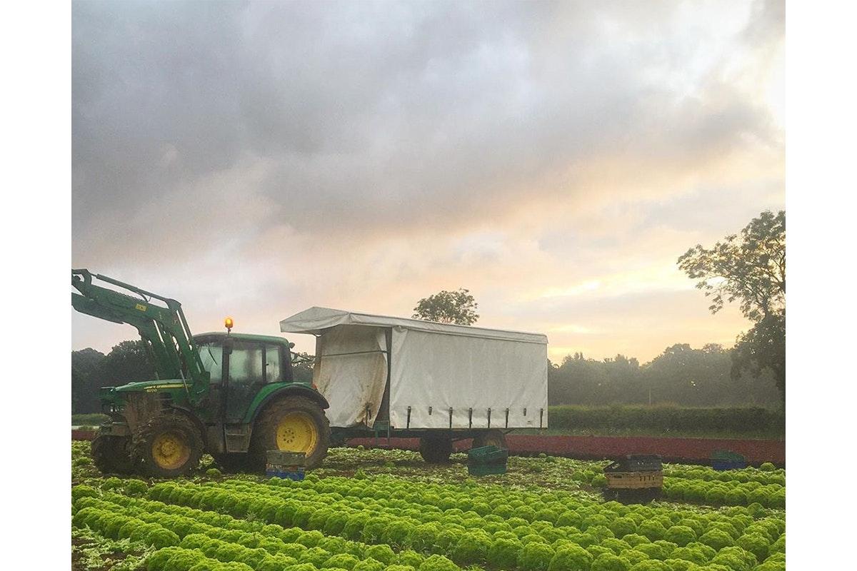 Ncgm British Food Fortnight Salads Dj Hayward Crop In Field