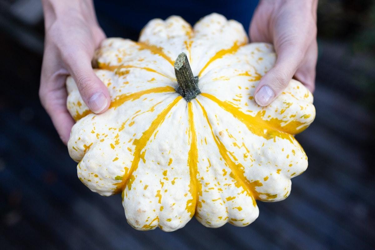 Ncgm British Food Fortnight Squashes In Hands