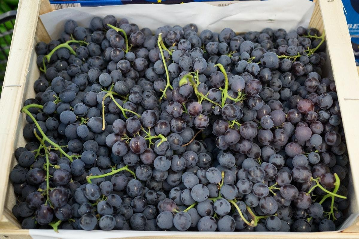 New Covent Garden Market Muscat Grapes