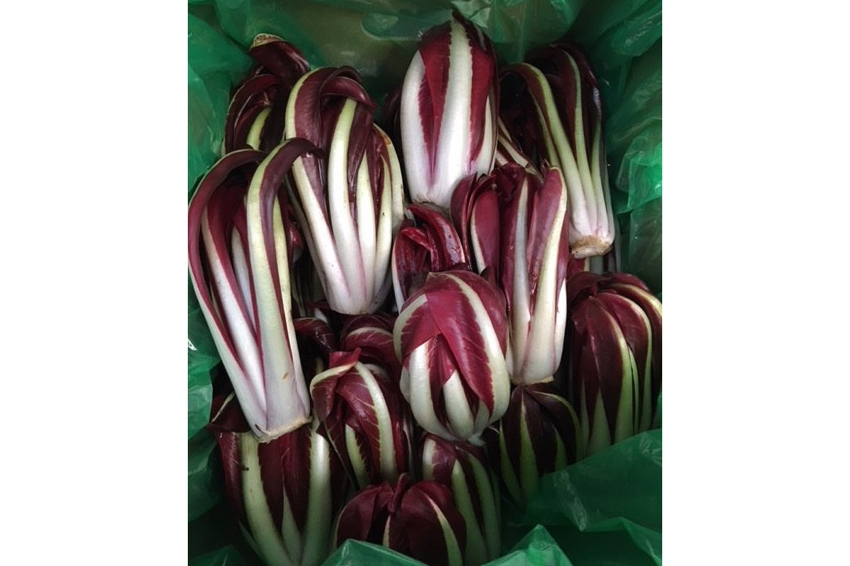 New Covent Garden Market New Start 2021 Tardivo Radicchio