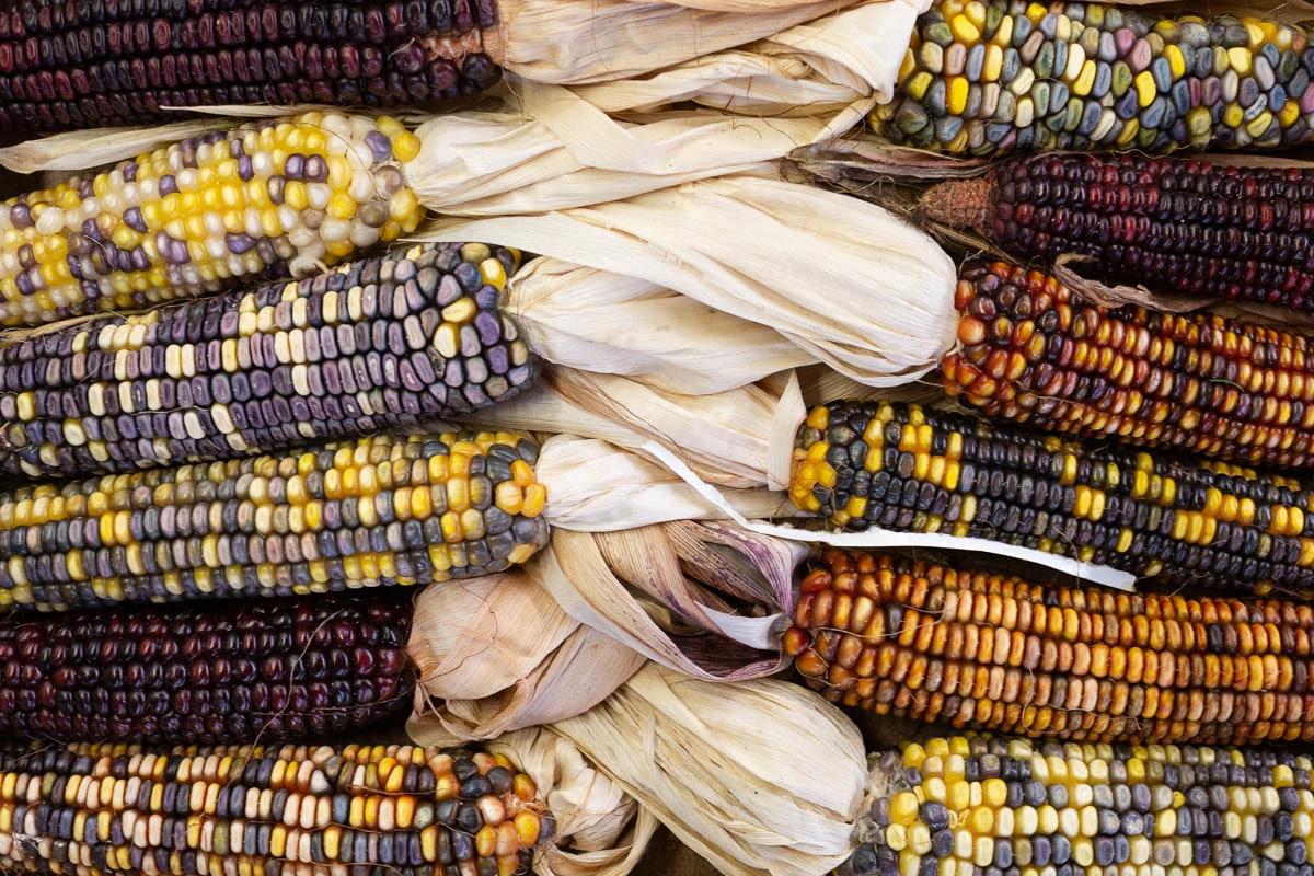 New Covent Garden Market Report October 2021 Heritage Corn