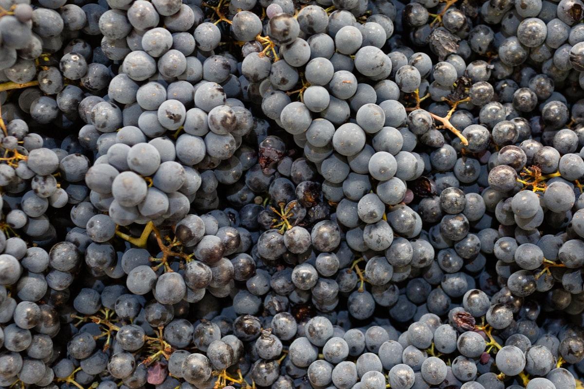 New Covent Garden Market Report October 2021 Muscat Grapes