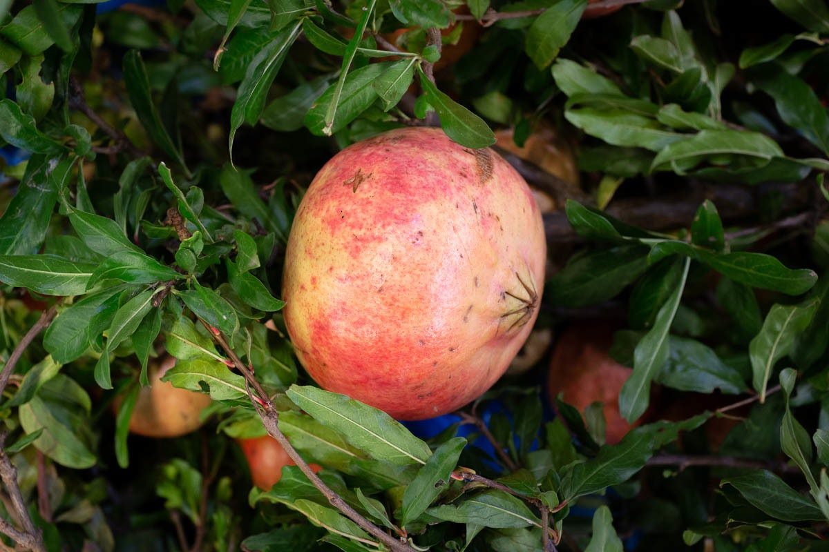 New Covent Garden Market Report October 2021 Pomegranate
