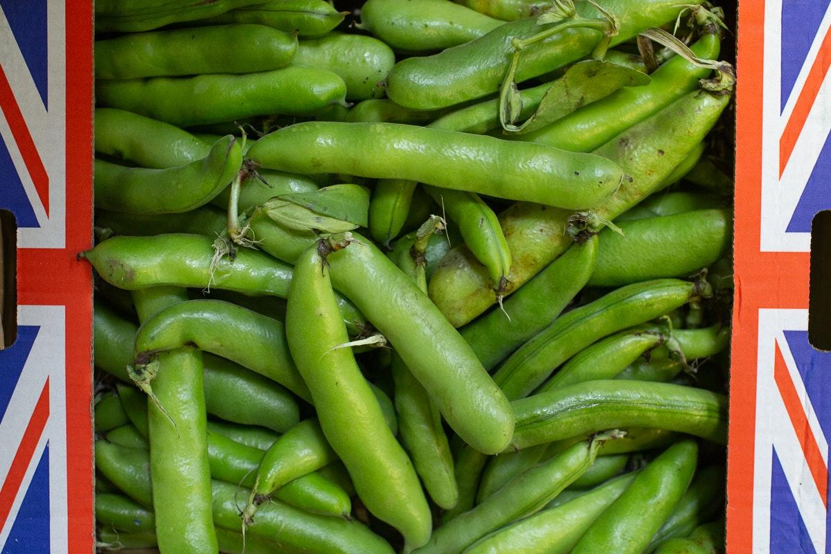 New Covent Garden Market Report September 2021 Broad Beans