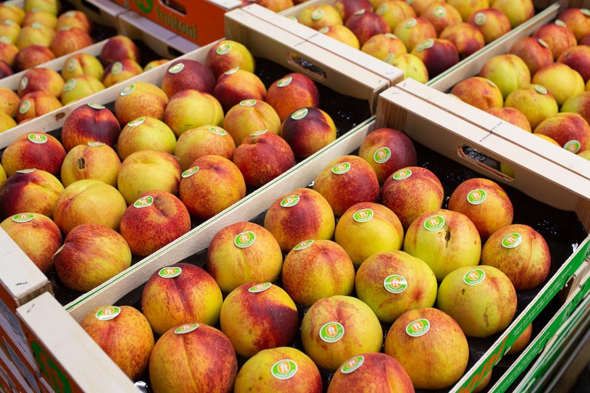 New Covent Garden Market Report September 2021 Nectarines