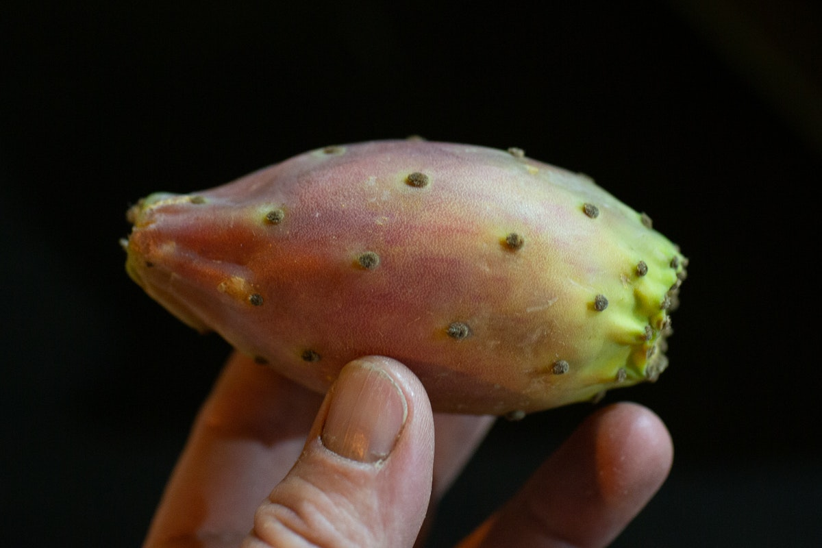 New Covent Garden Market Report September 2021 Prickly Pears