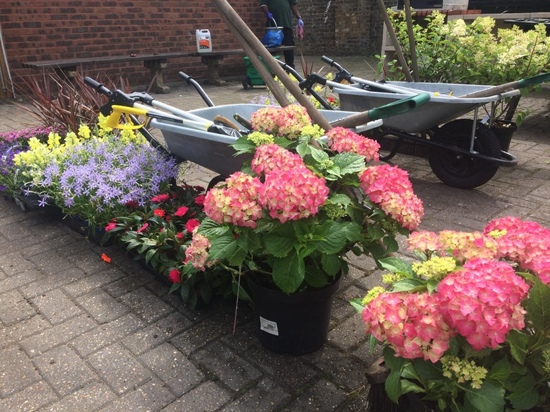 Plants from New Covent Garden Market used to brighten up Nine Elms