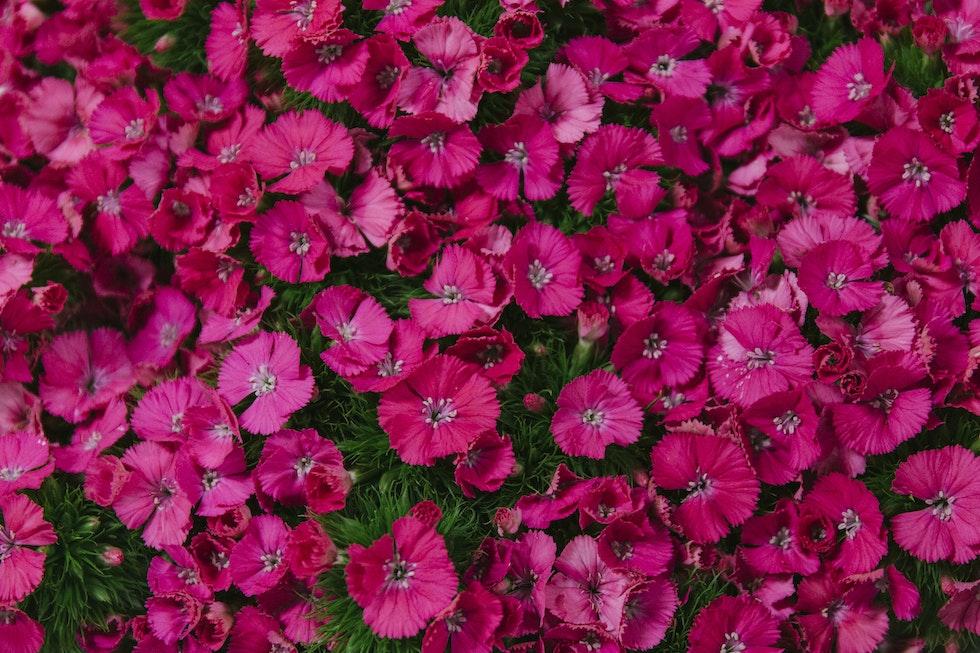 Dennis Edwards Flowers Ltd