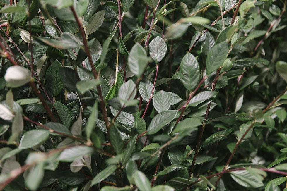 Porters Foliage Ltd