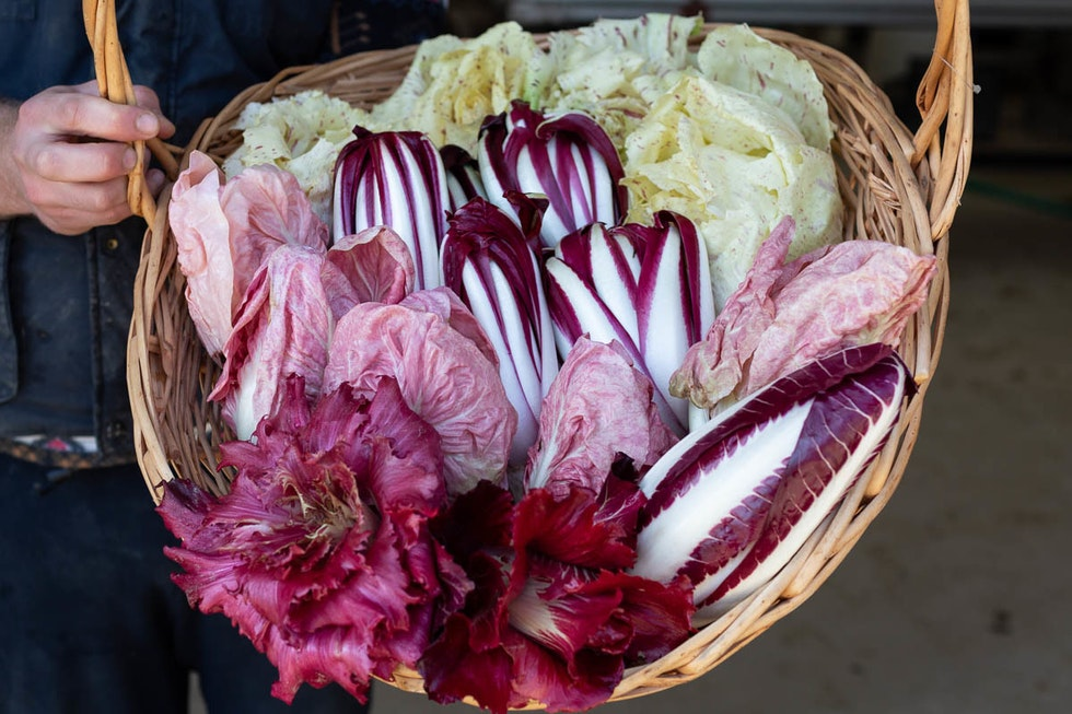 A chef's guide to radicchio
