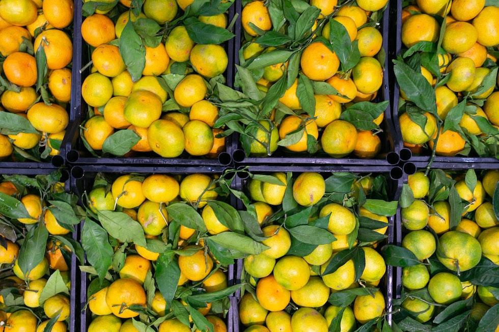 Fruit and veg in season this November