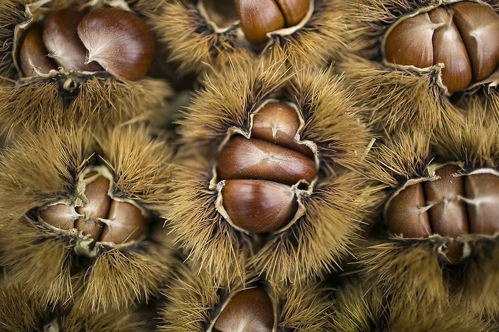 A chef's guide to chestnuts