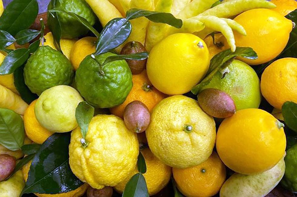 A Chef's Guide to Rare Citrus